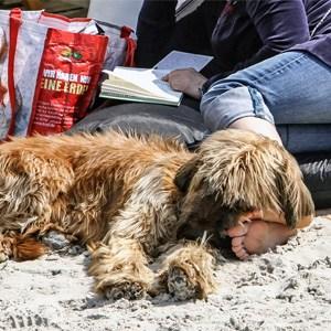 Entspannung für Hund und Mensch