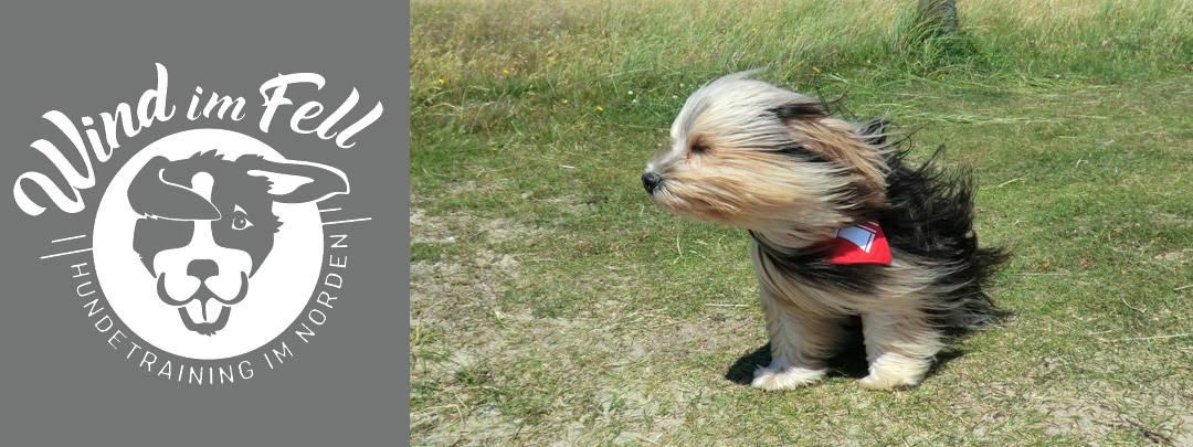 Hundeschule Schenefeld