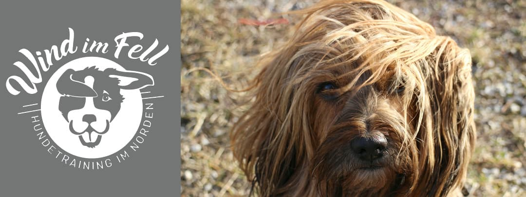 Individuelles Hundetraining in Schenefeld, Wedel, Hetlingen