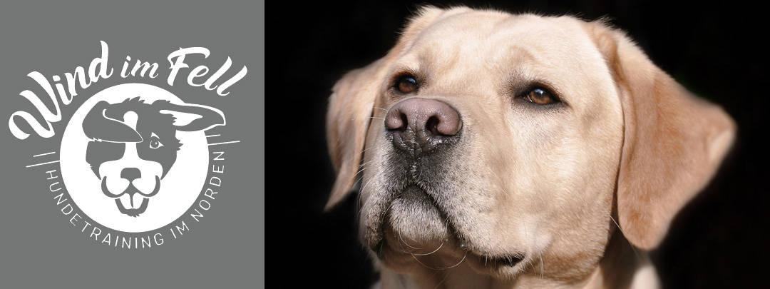 Liebevolles und professionelles Hundetraining im Kreis Pinneberg für Sie und Ihren Hund