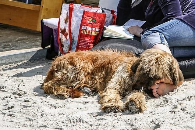 Entspannungstraining für Hunde Schenefeld