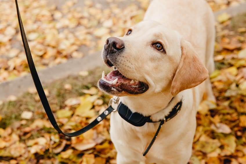 Einzeltraining für Hunde in Schenefeld und Hetlingen