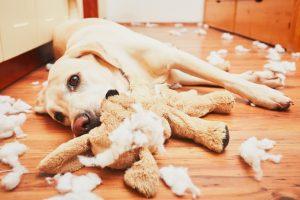 Einzeltraining für Verhaltensprobleme beim Hund