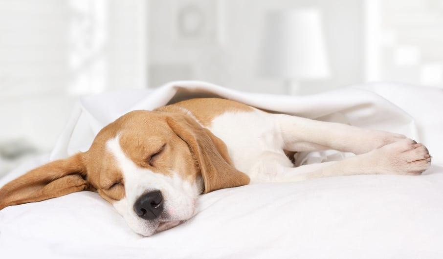 Entspannungstraining für Hund und Halter